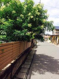 枝の剪定作業前 おそうじ本舗鹿児島西田店