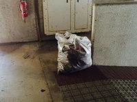 マンション定期清掃 落ち葉と灰除去 鹿児島市
