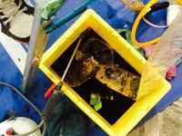 シティホテル 館内 業務用エアコン清掃クリーニング 洗浄排液(ヤニで真っ黒!) 鹿児島市照国方面